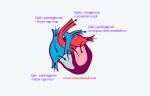 furnizimi i zemres me gjak