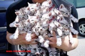 tons-cats copy