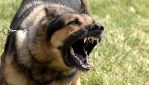 qen agresiv