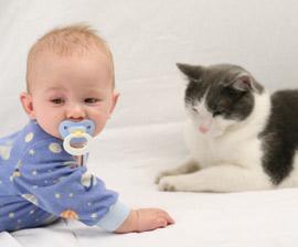 baby dhe mace
