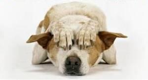 qeni dhe fobia nga zhurmat