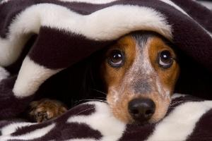 qeni dhe phobia nga zhurmat2