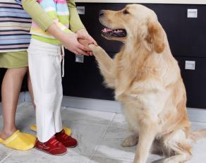 dog help autizm