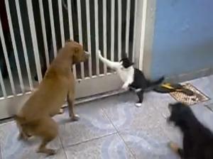 mace lufton pitbull