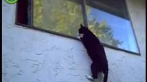 mace vjedh