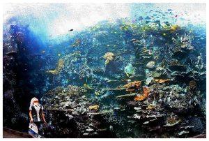 akuarium Atlanta
