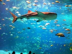 akuarium Atlanta2