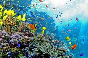 akuarium Atlanta3