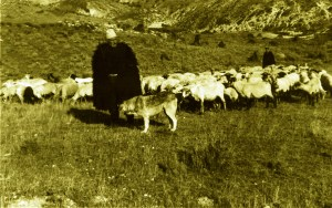 Halil Bedaj me tofen e bagetivi dhe qenin e e kopese!