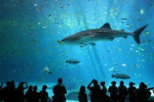 peshkaqeni balene
