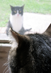 macet shihen