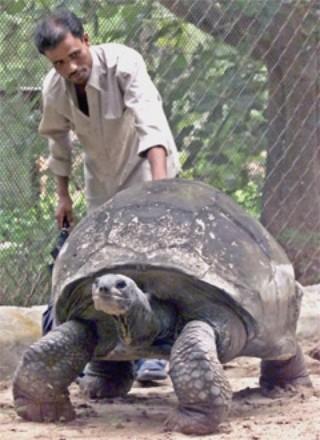 Breshka Adwaita është shellë në kopshtin zoologjik të kalkutës në vitin 1875. Ajo vdiq në vitin 2006 pranë po këtij kopshti zoologjik dhe jetoi plot 255 vjet.