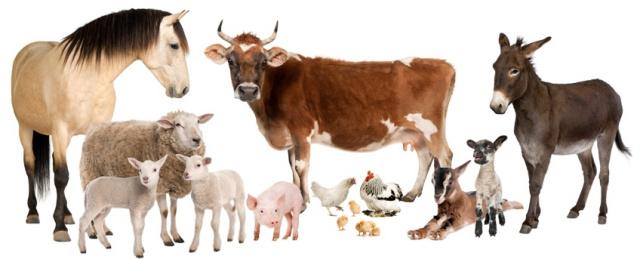 kafshet e fermave