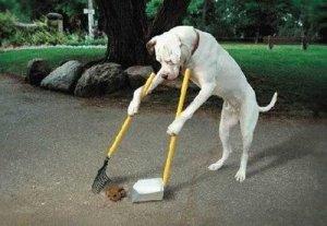 qeni pastron