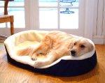 Artritet qen ne krevat