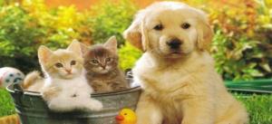 qen dhe mace