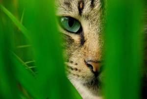 mace sjellja