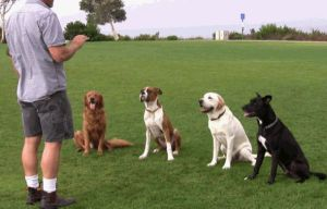 Trainimi i qenit
