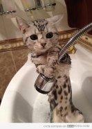 mace e frikesuar ne dush