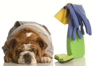 pastrimi qen