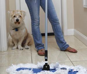pastrimi rreth qenit