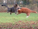 mace luftojne