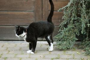 Macja sperkat-shenon territorin