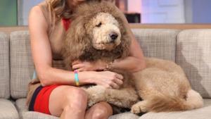 qeni luani2