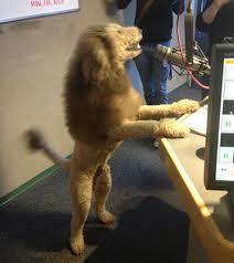 qeni luani6