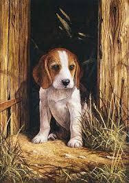 beagle kelysh