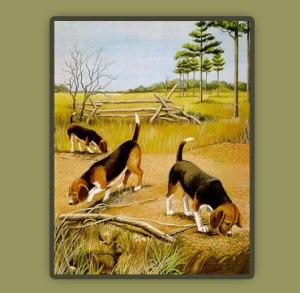 beagle ne gjah