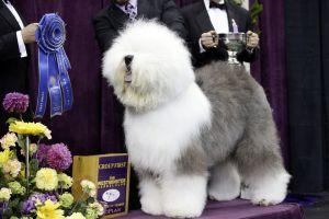 Swager qeni me shume i duartrokitur nga publiku