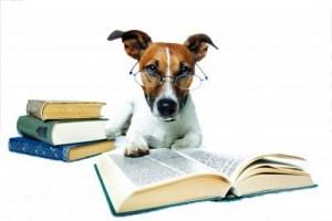 Qeni ne studim
