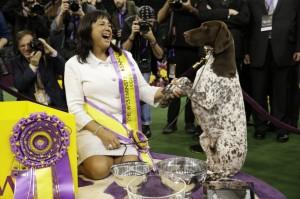 CJ qeni fitues 2016