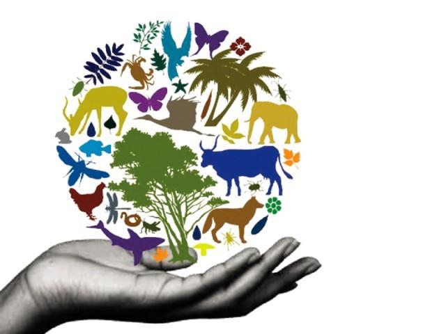 lidhja-toke-kafshe-njeri