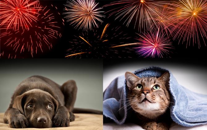 frika-nga-fishekzjarret