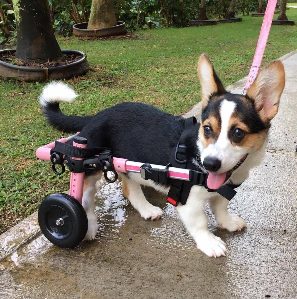 qenush invalid